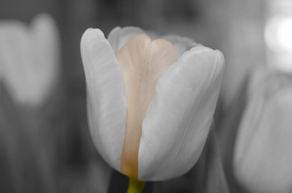 flower-144285-min